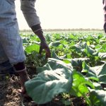 Regularisation of irregular migrant workers