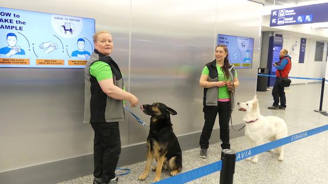 Helsinki's airport using dogs to detect coronavirus